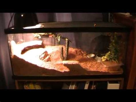 Leopard Gecko Tank Setup with Zoo Med Excavator - YouTube