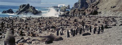 Bouvet Island   Expedition Cruises to Antarctica Bouvet